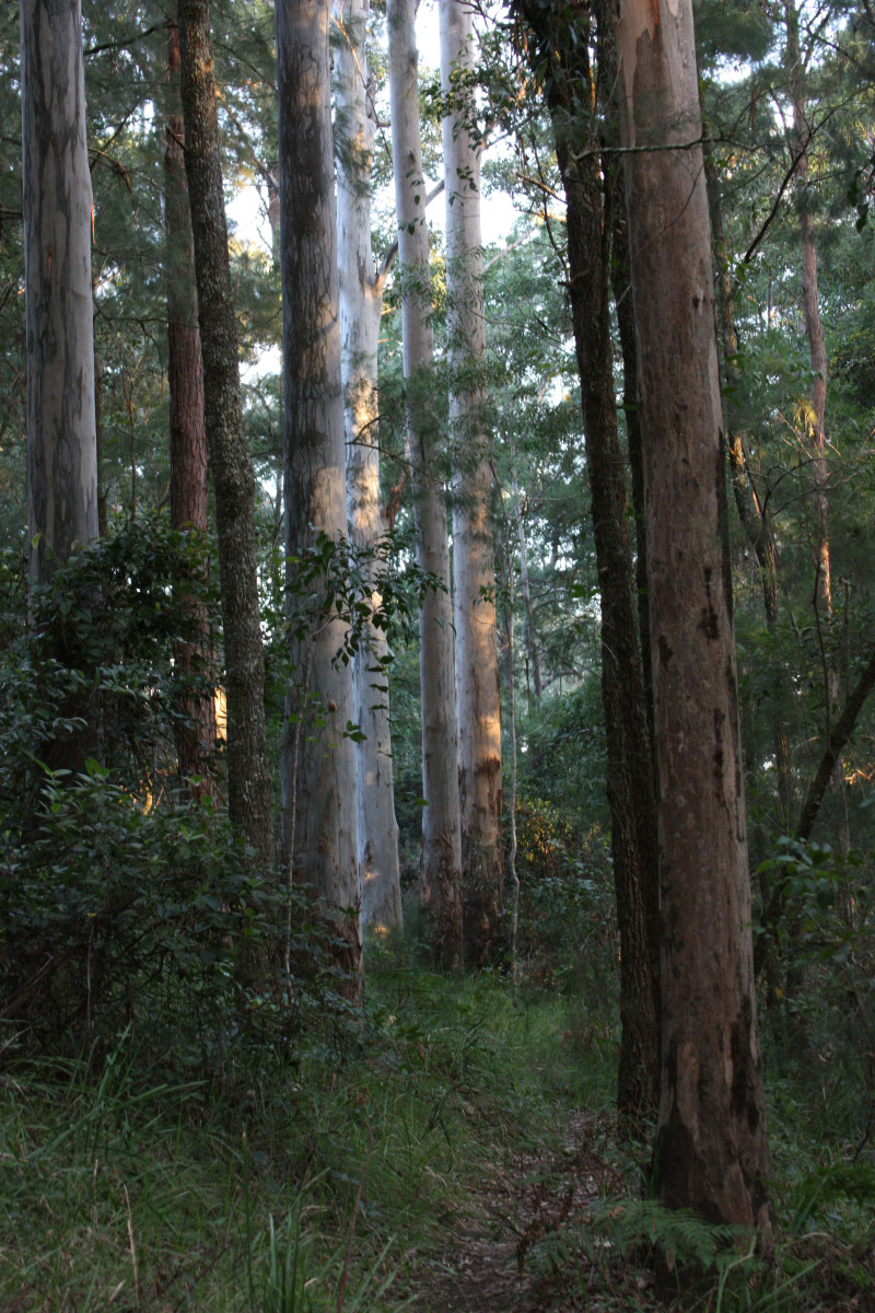 The Australian Bush was the subject of most painting by artists of the Heidelberg School