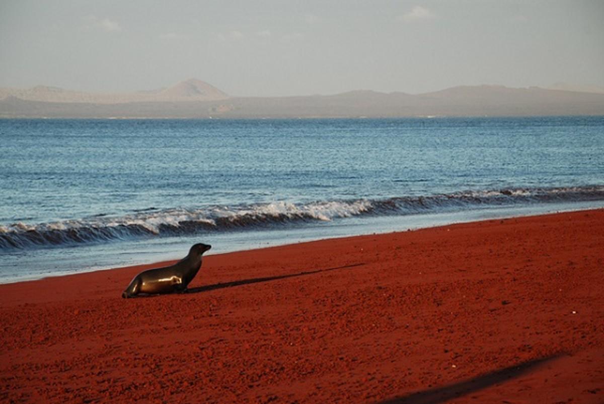 Red Sand Beach, Rabida Island Galapagos
