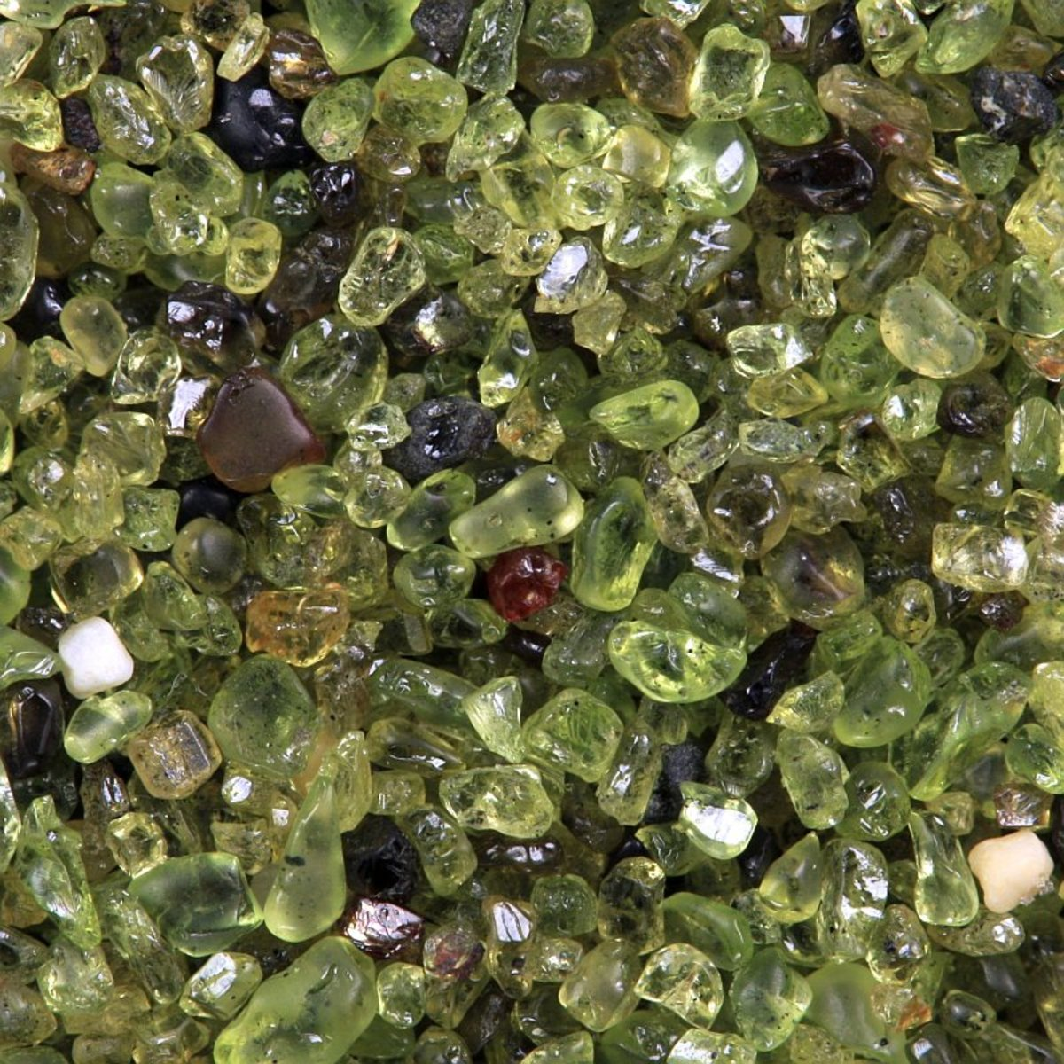 Olivine sand pebbles collected near the Southern Tip of Hawaii