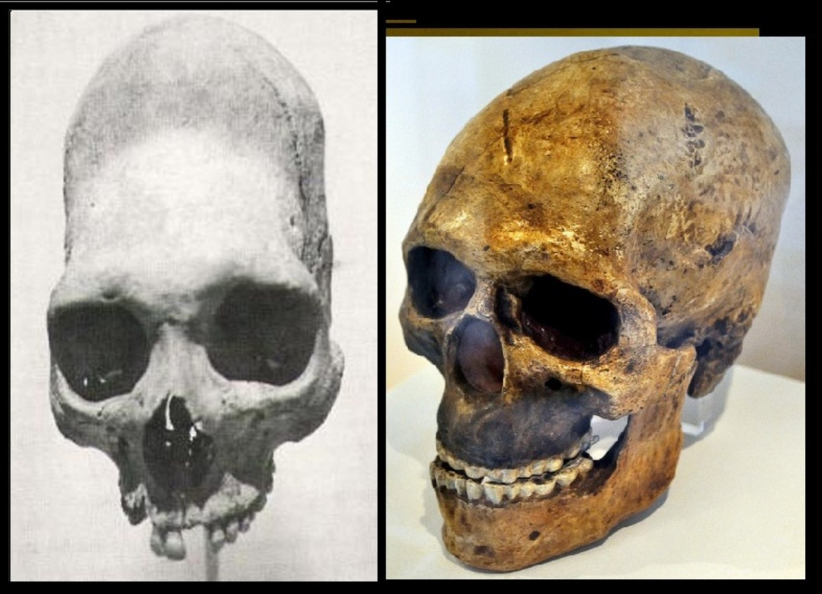 Note the difference between the read haired giant skull on the left (elongated) and a skull of a European on the right.