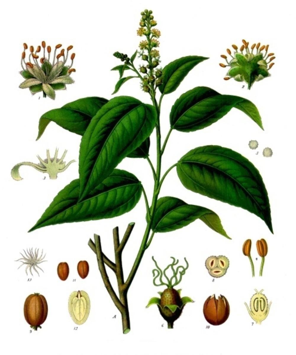 The Jamalgota Plant