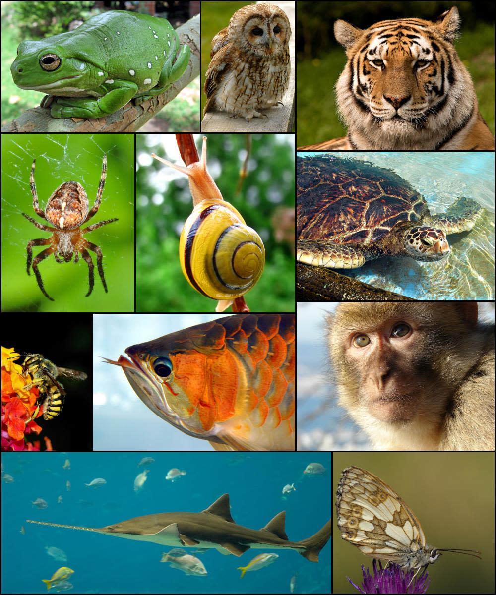 Monogamous Animals