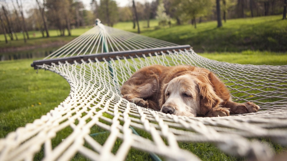 10-care-and-precautions-for-dog-with-upset-stomach-diarrhea