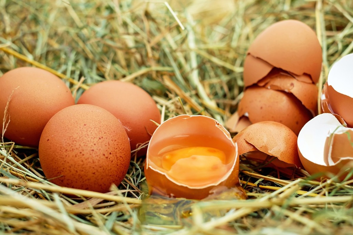What Causes Egg Burps
