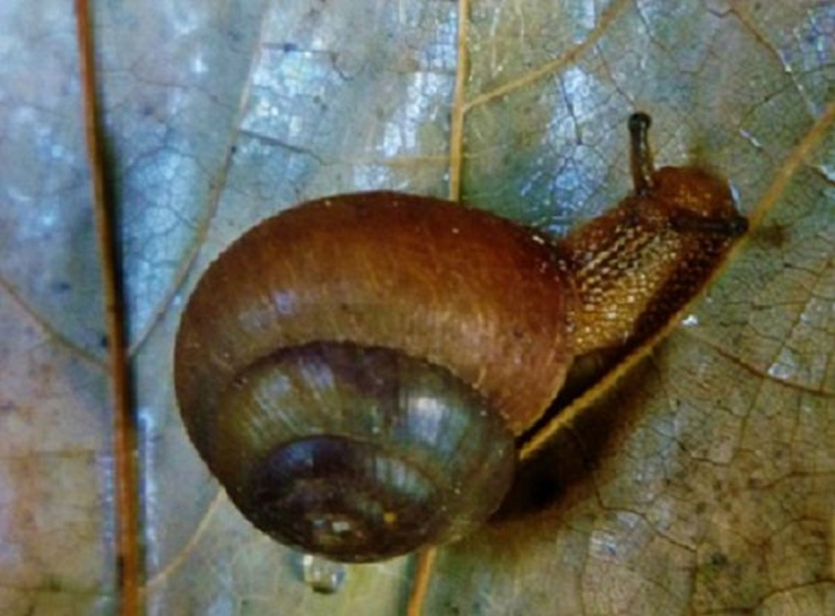 How To Rid Your Garden Of Snails