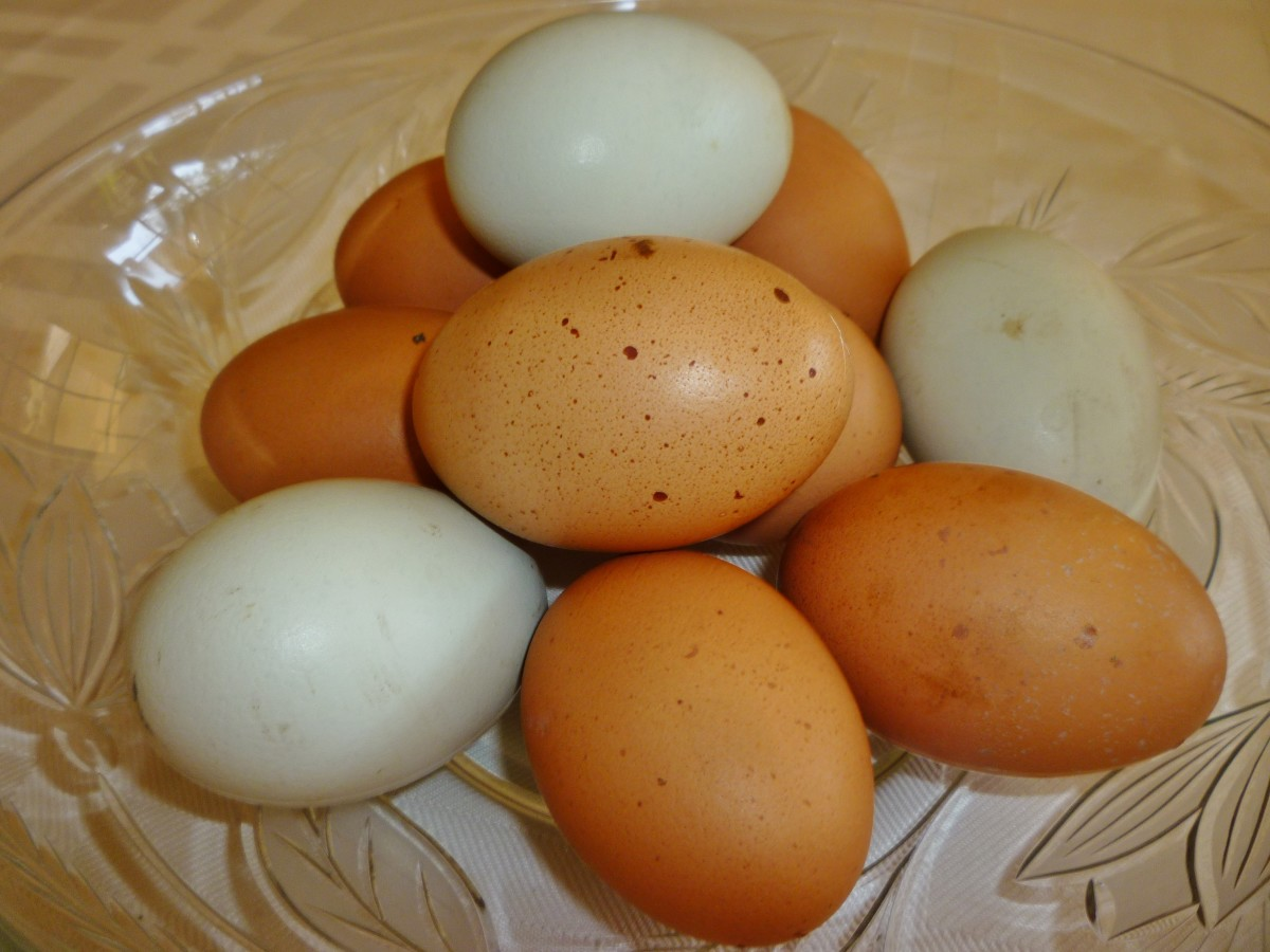 Save your eggshells to combat snails and slugs!