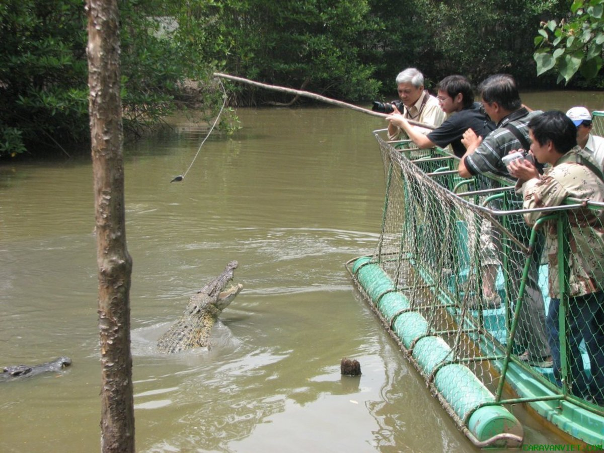 Fishing crocodiles for fun is of nice interest to try