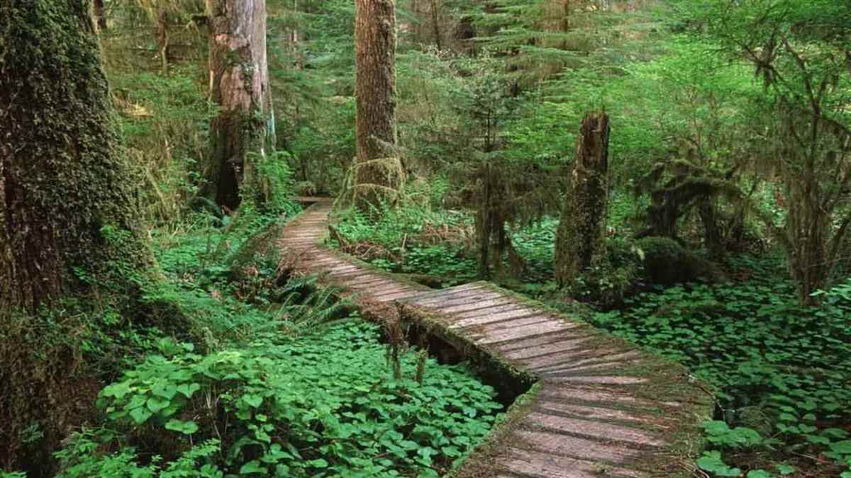 Concrete paths piercing through the lush green forests