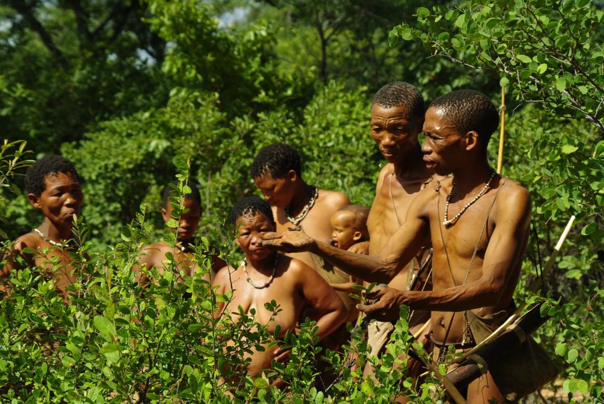 Herbalism in Africa