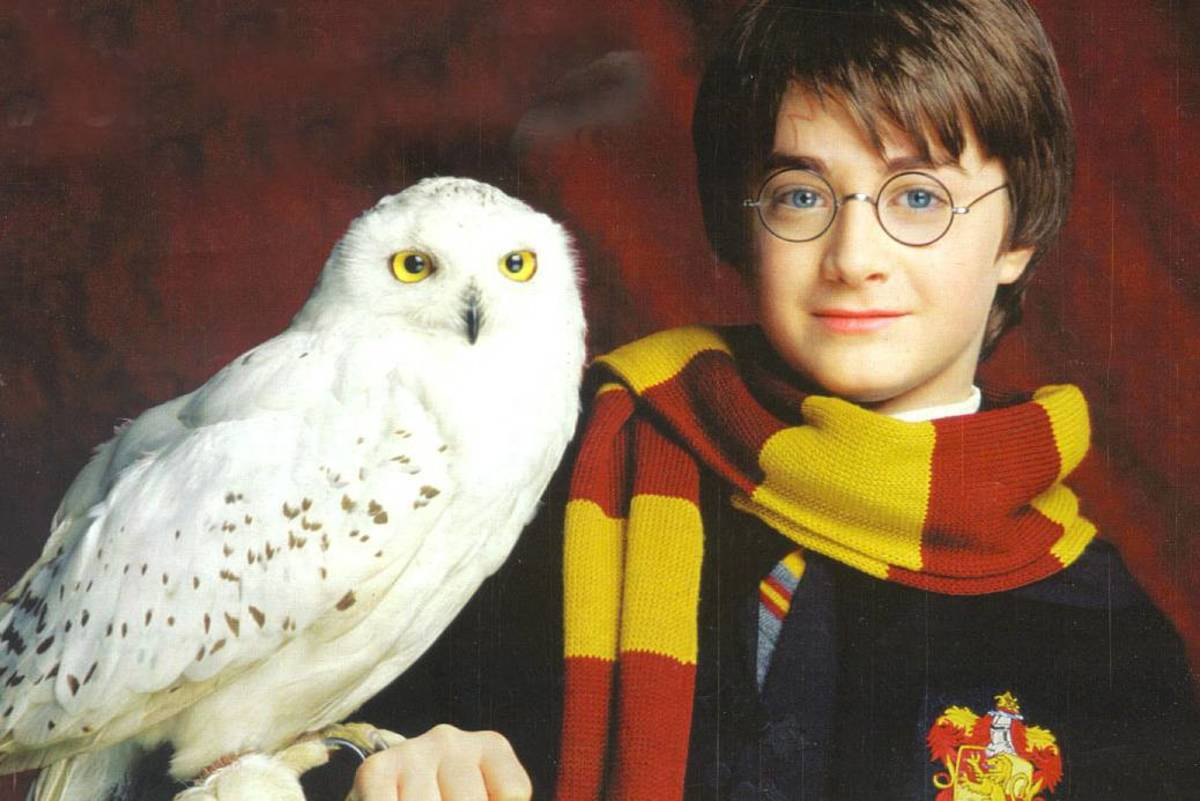 Hedwig is cute, but would she be more effective than a phone call?