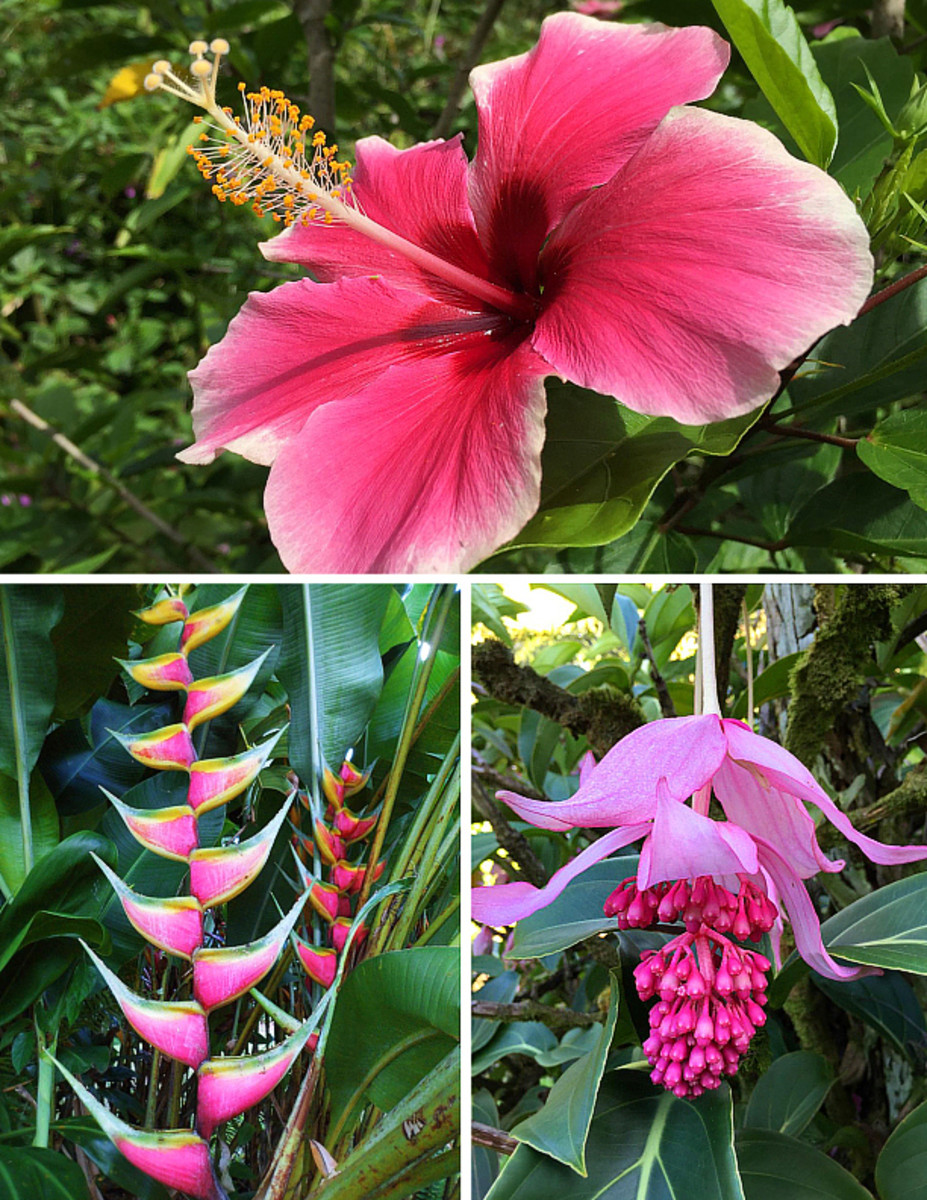 Planting A Garden With Pink Tropical Flowers