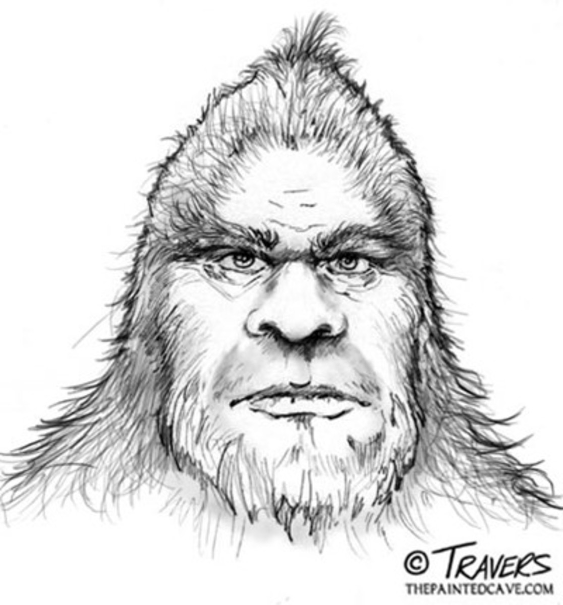 The Sasquatch People are our ancient fore bearers or Big Brothers and were created 50 million years before mankind.