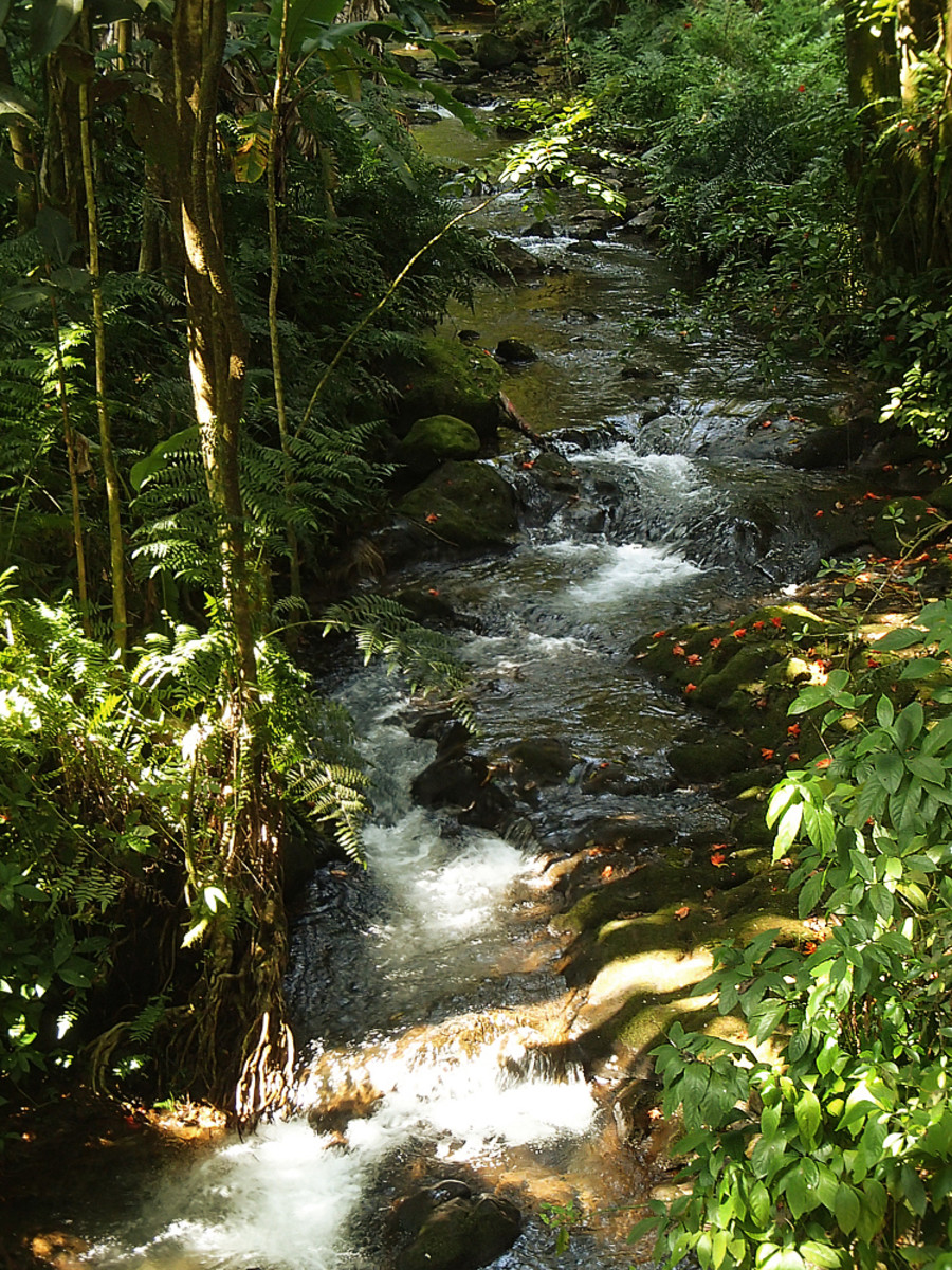 Listen to the sound of a bubbling jungle stream.