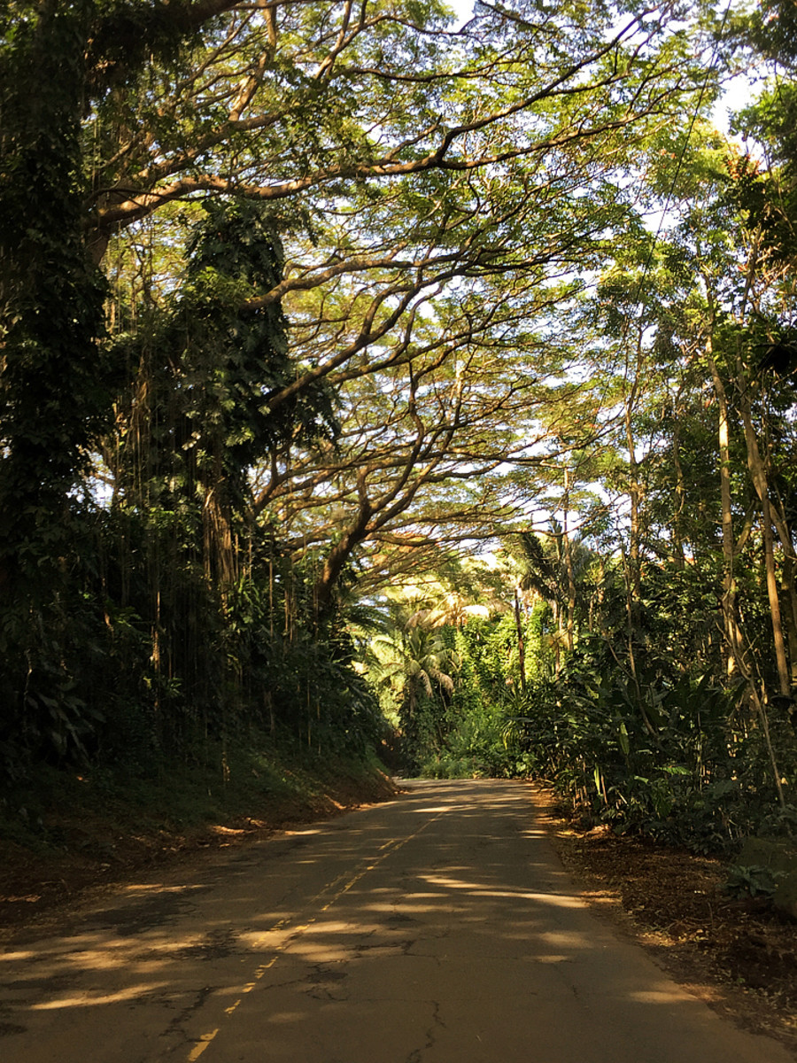 Hawaii Road Trip: Four Mile Scenic Drive on the Big Island