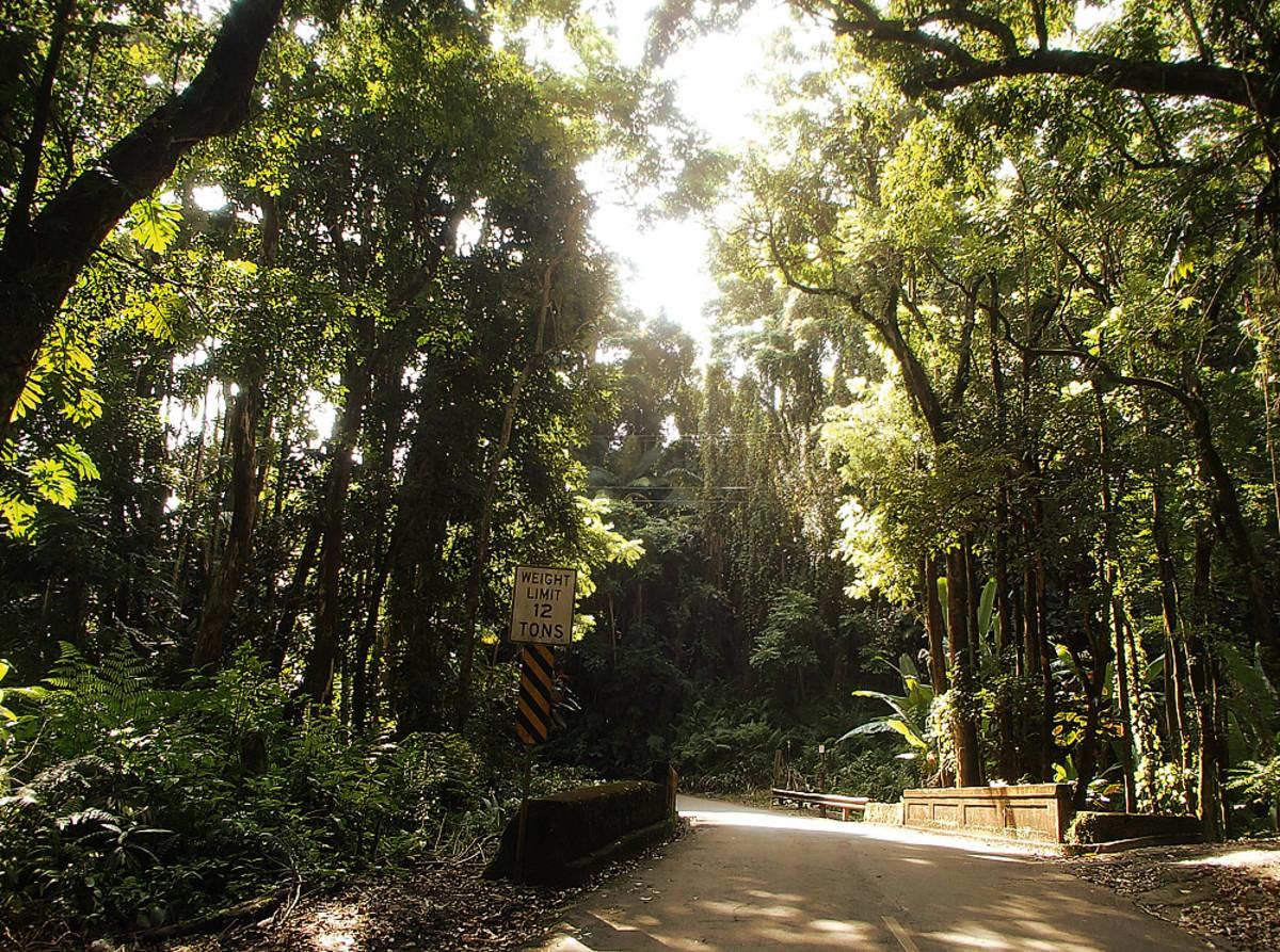 Narrow road shaded by tree tunnels.