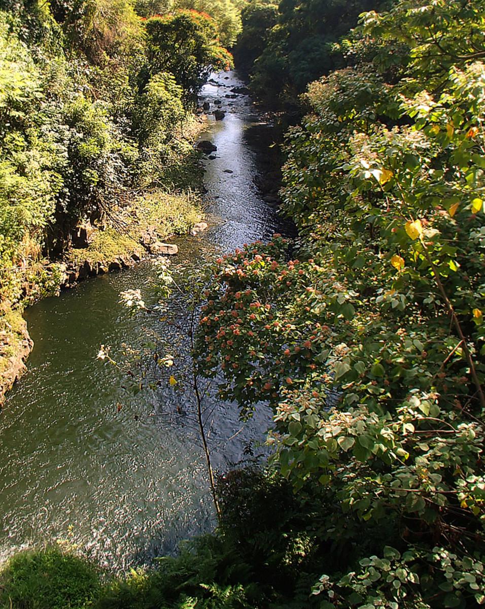 Another peaceful stream flows toward the ocean.