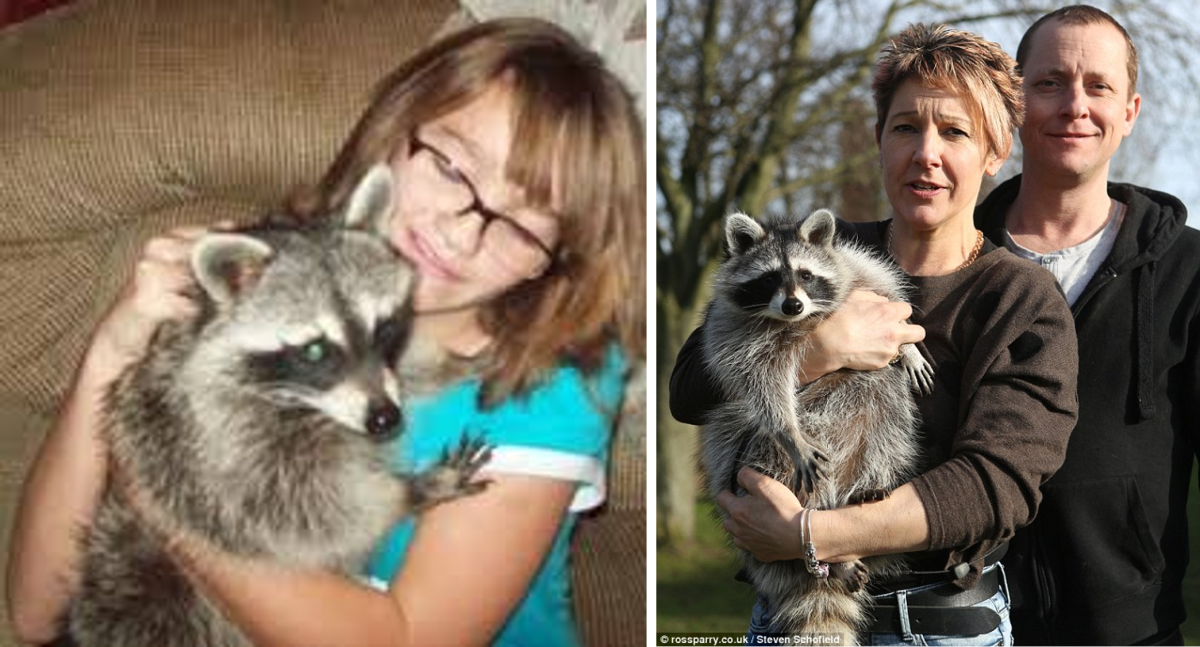 Pet Raccoon Dog