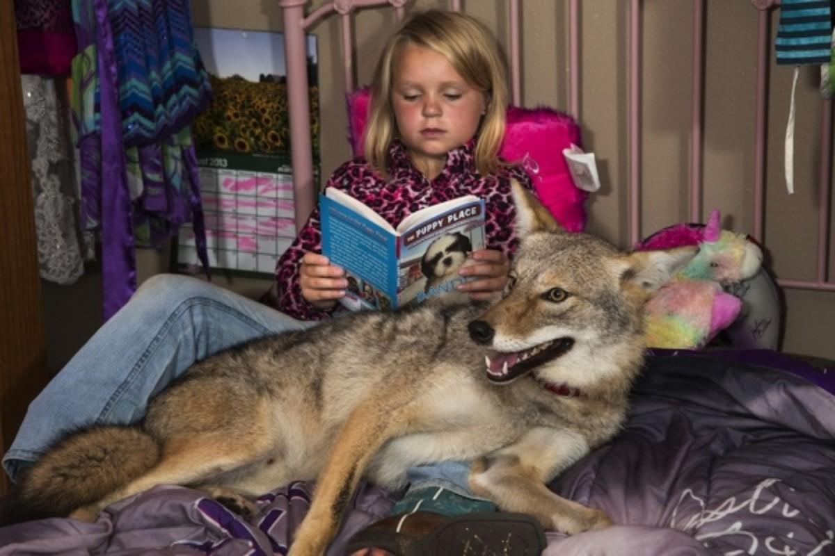 A Pet Coyote