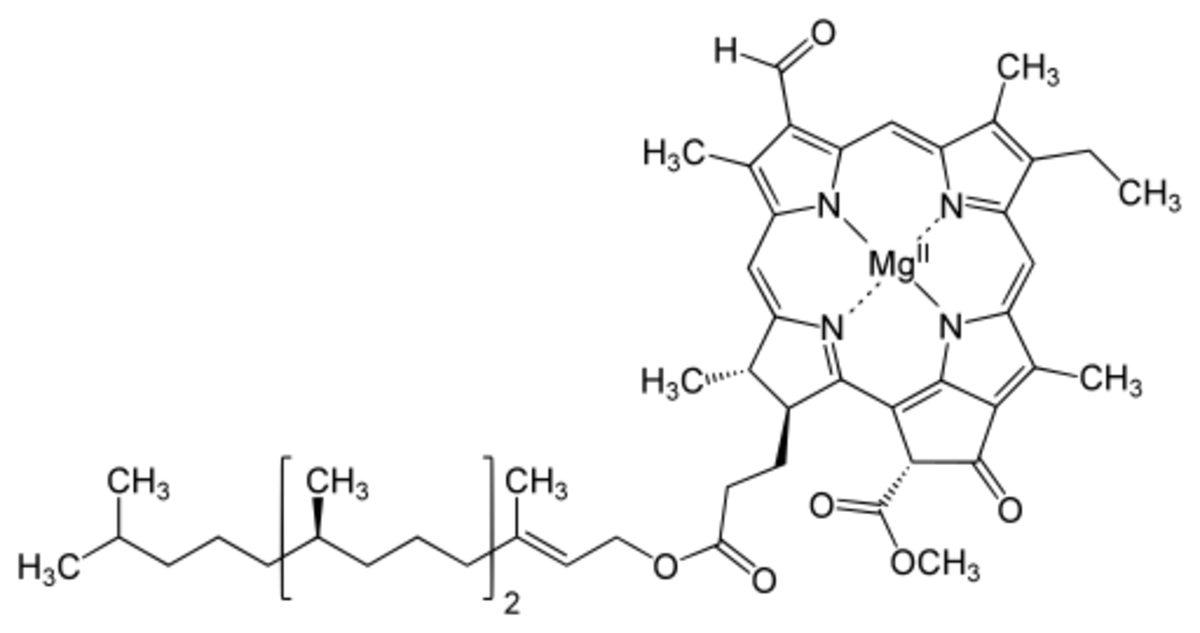 Structure of a Chlorophyll (N represents Nitrogen)