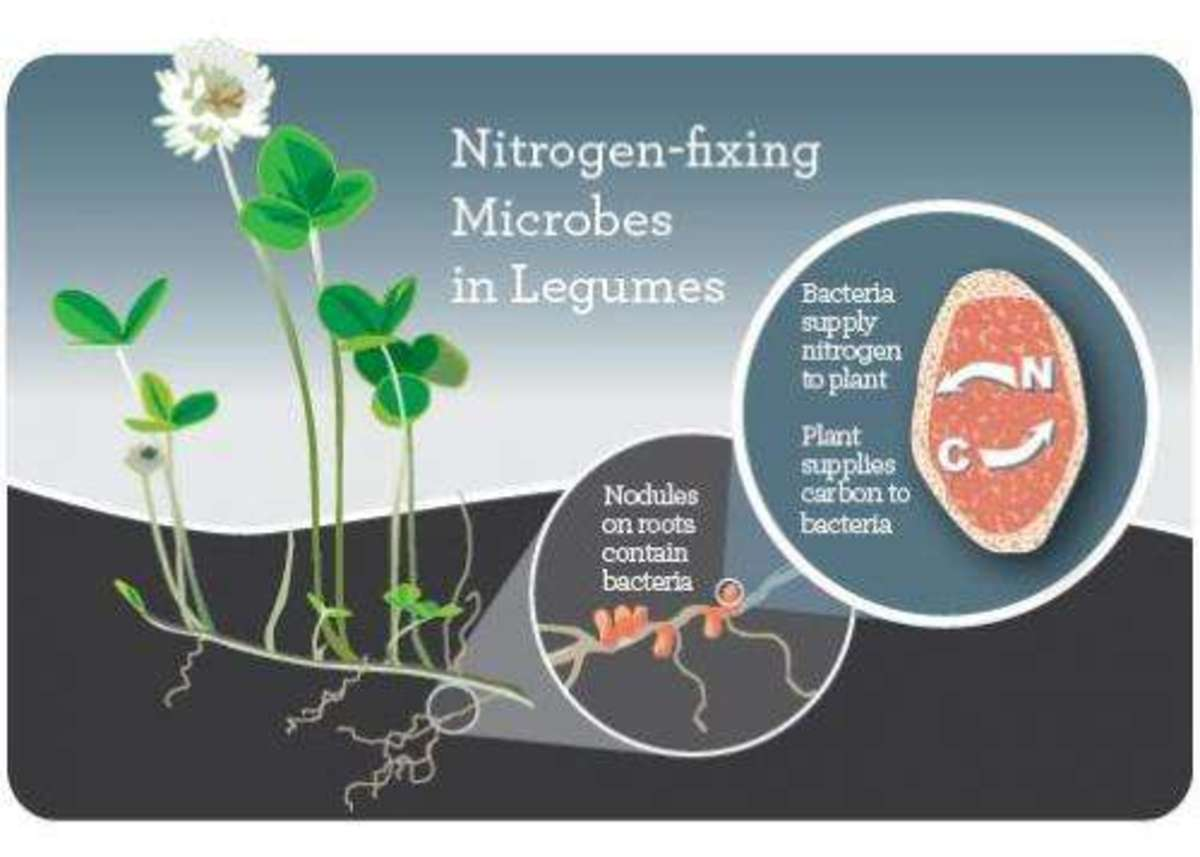 how-does-nitrogen-help-in-plant-growth