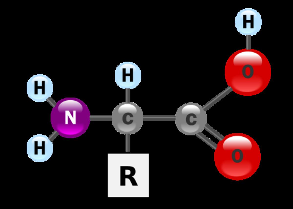 Structure of Amino Acid (N represents Nitrogen)