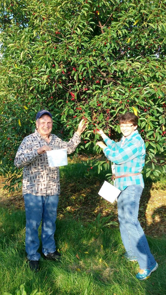 Cherry picking with cousin Margie in Door County.  Taken in 2018.