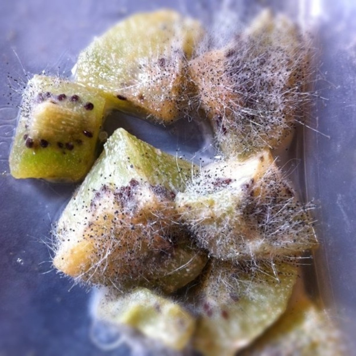 Example of mold on Kiwi fruit.