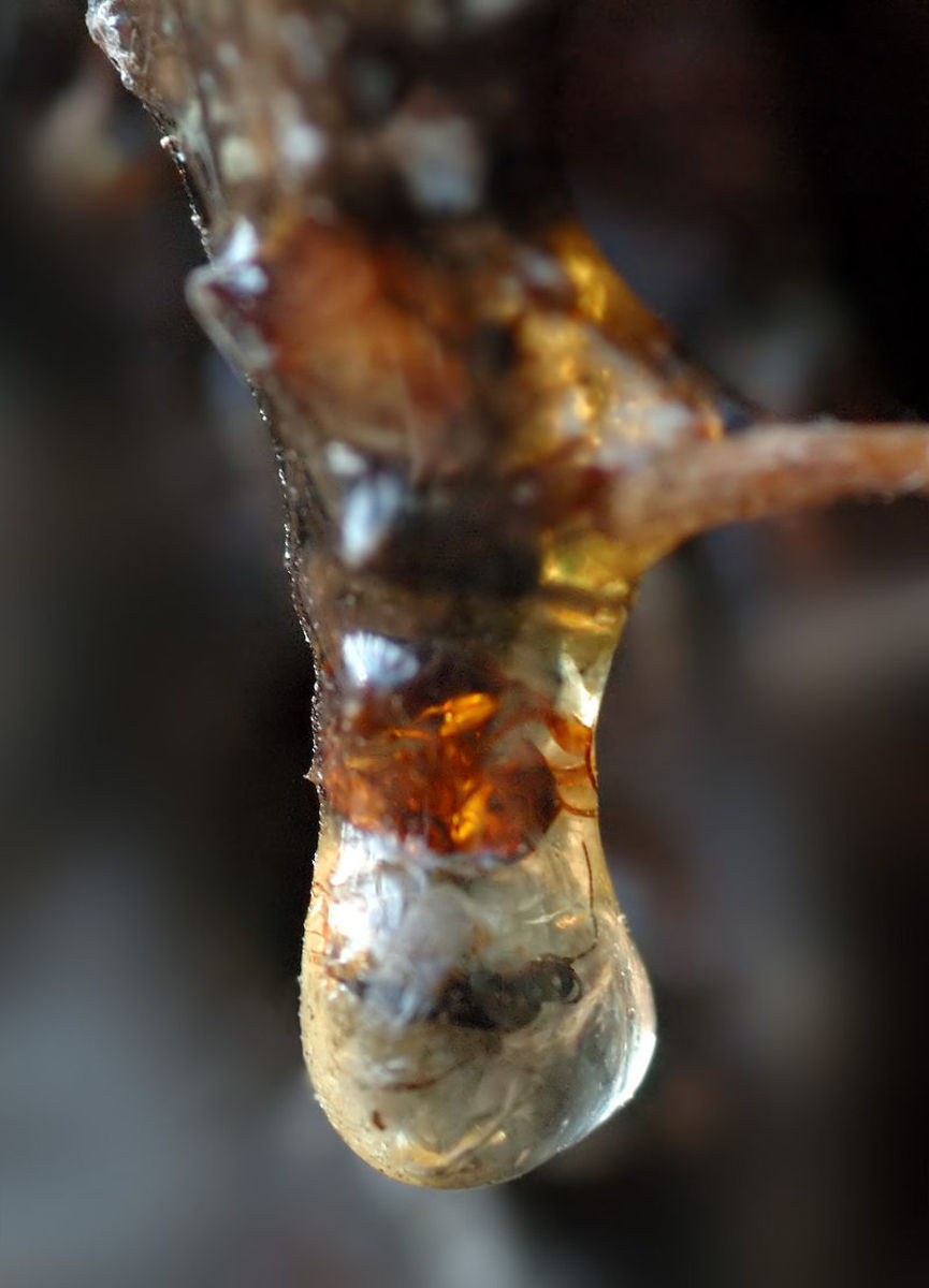 This image shows resin with an insect