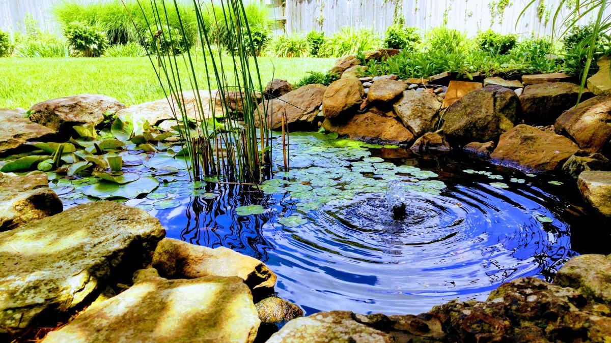 backyard-pond-maintenence
