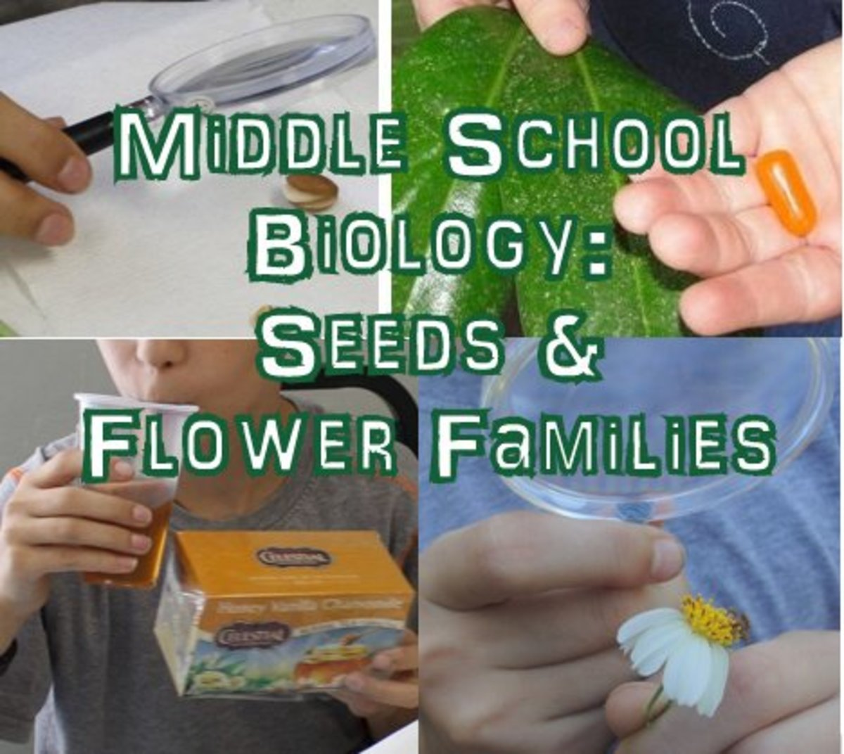 Middle School Biology Lesson on Seeds and Flower Families (Botany)
