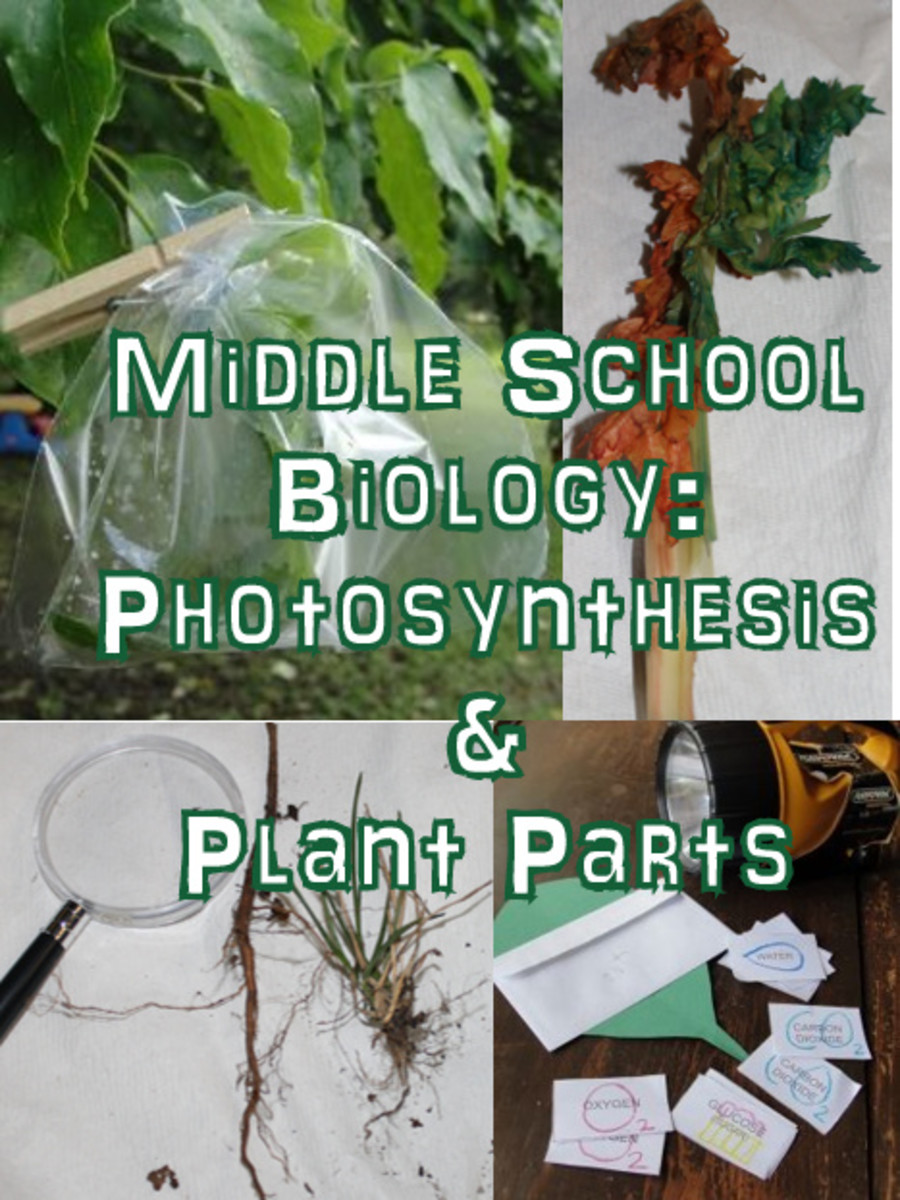 Photosynthesis and Plant Parts Lesson for Middle School Biology