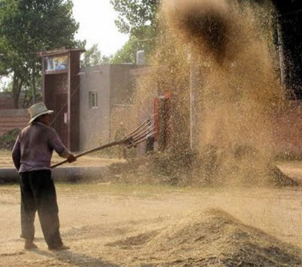 The Farmer Winnowing Wheat, Wind separates the chaffs from the seeds.