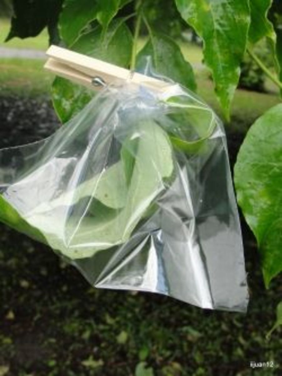 Watching transpiration in action (in less than an hour, which impressed everyone) was one of the activities we did this week and is included in the above link: Science Morning Basket & Activities: Plant Systems.