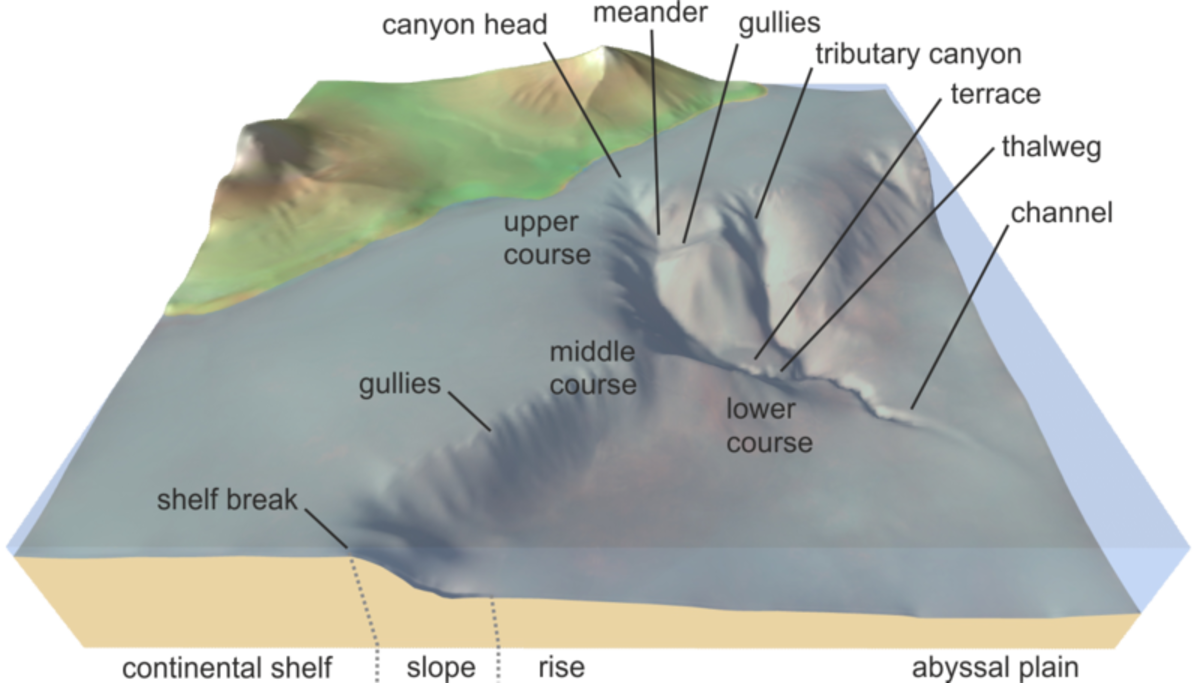 An illustration showing the key features of the ocean floor leading down to the abyssal plain