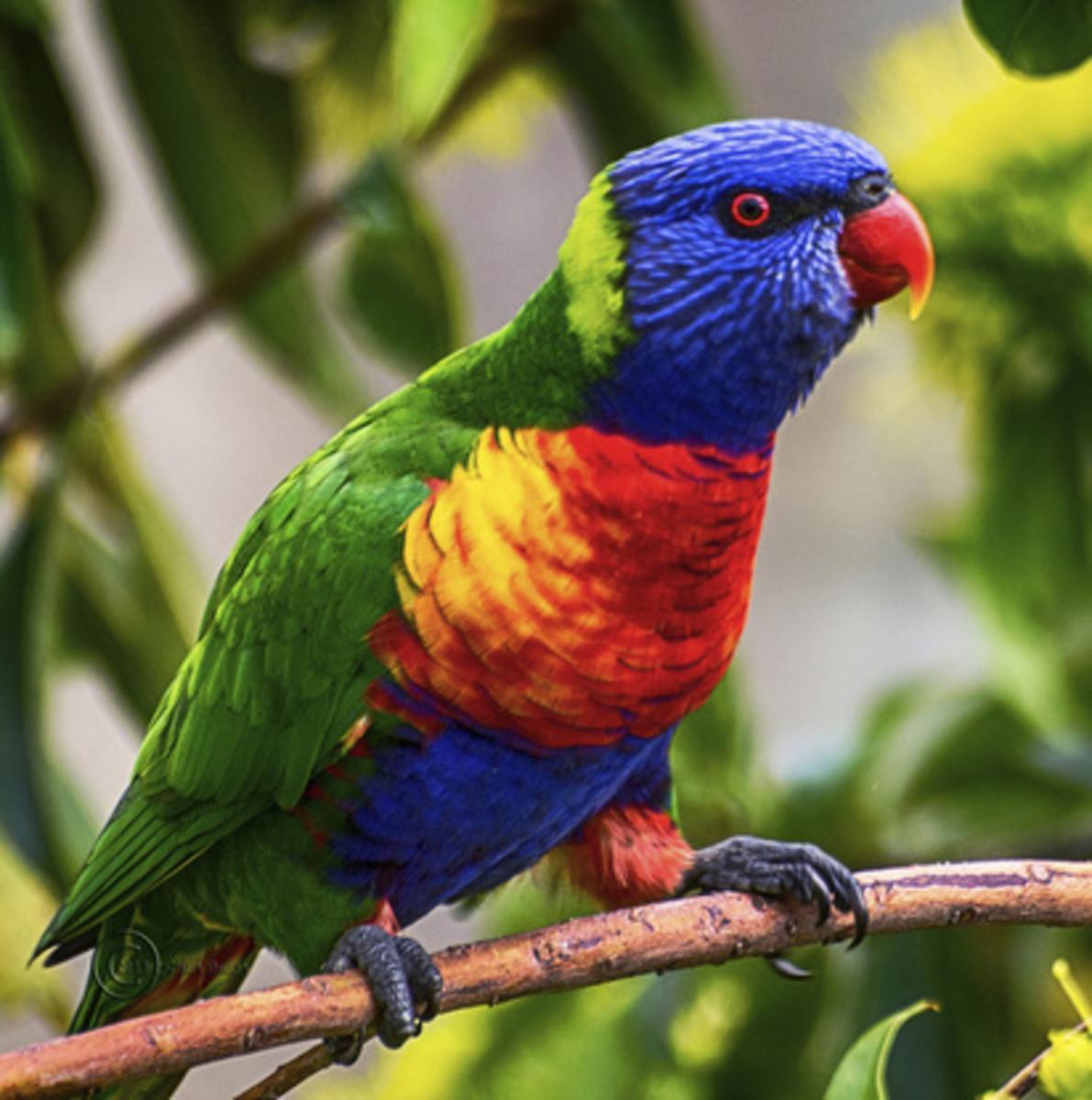 The World's Most Beautiful Birds II