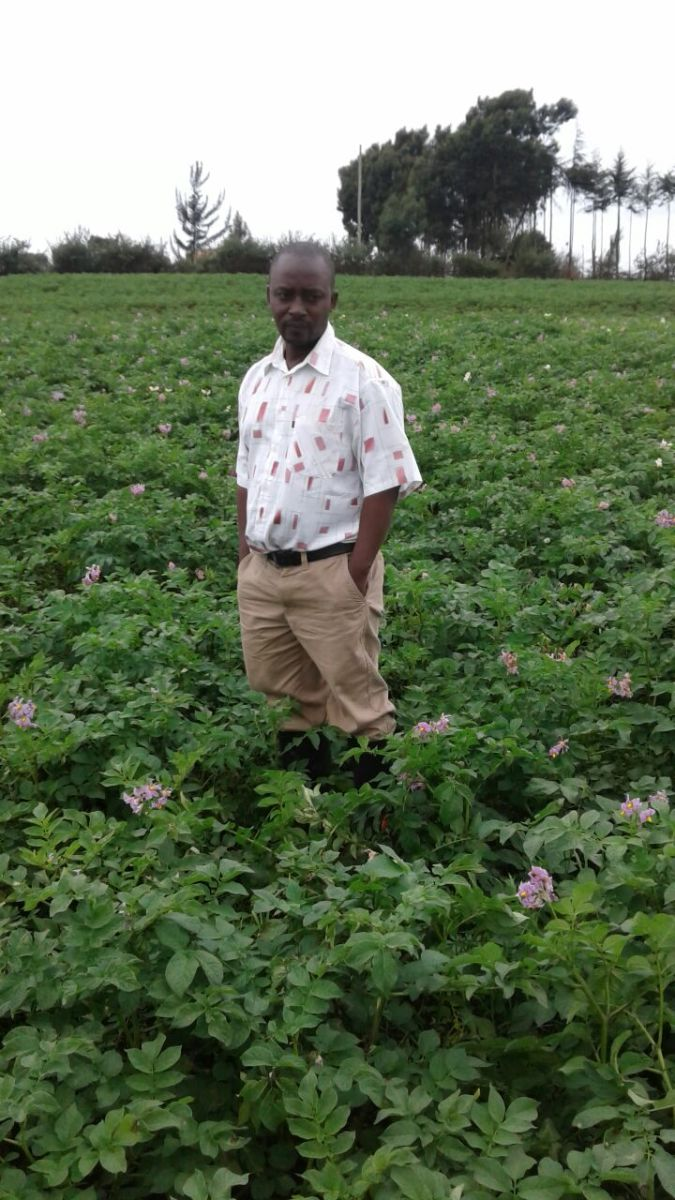 Potato farming