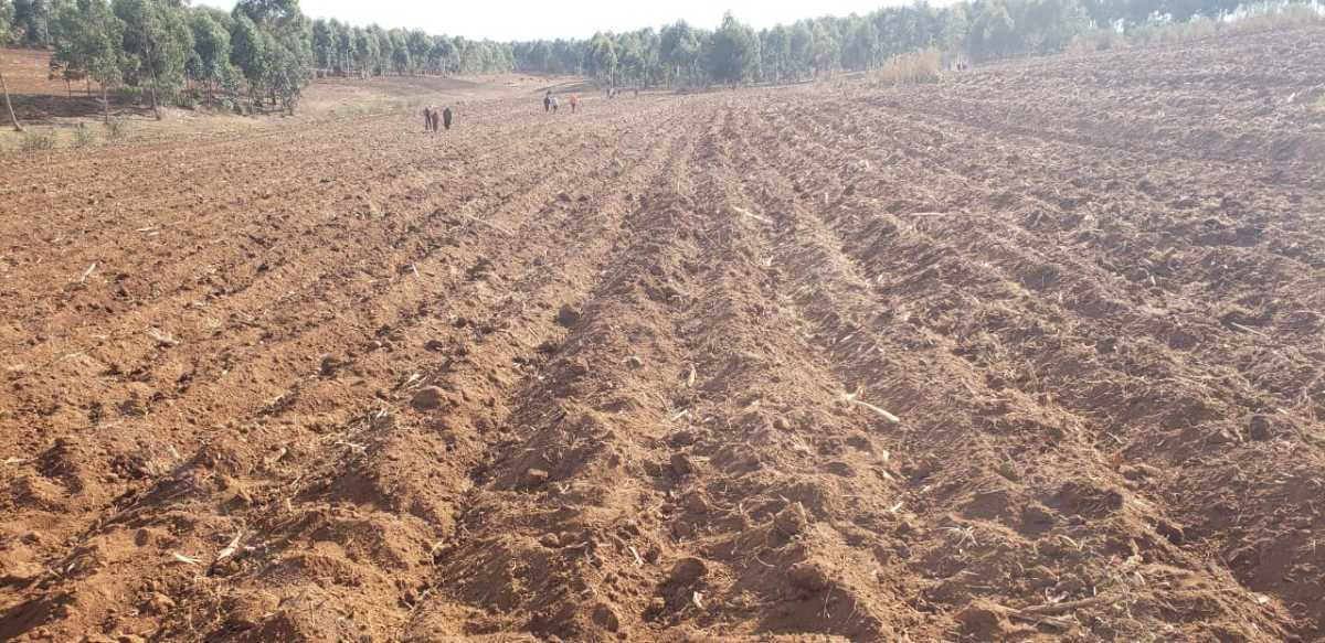 Preparing land for planting