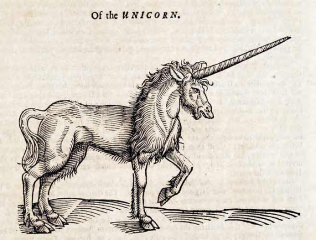 Of the Unicorn