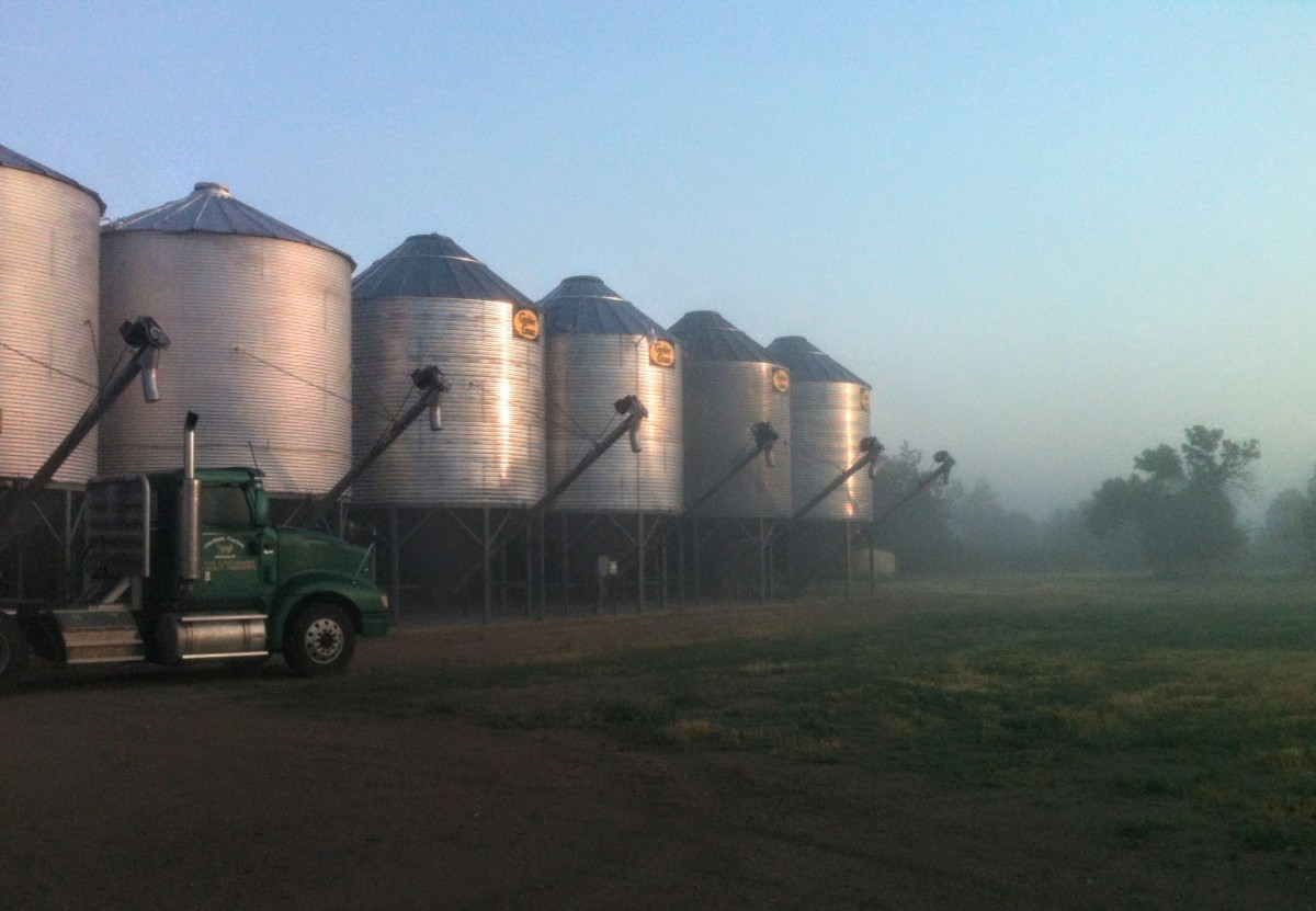 My husband and I erected all of the bins in this row. I look forward to the serenity of an early-morning job site, and count grain bins among our happiest projects.