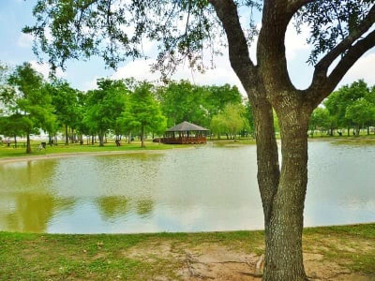 Discovering the Fantastic Arthur Storey Park in Houston: Fun For All Ages