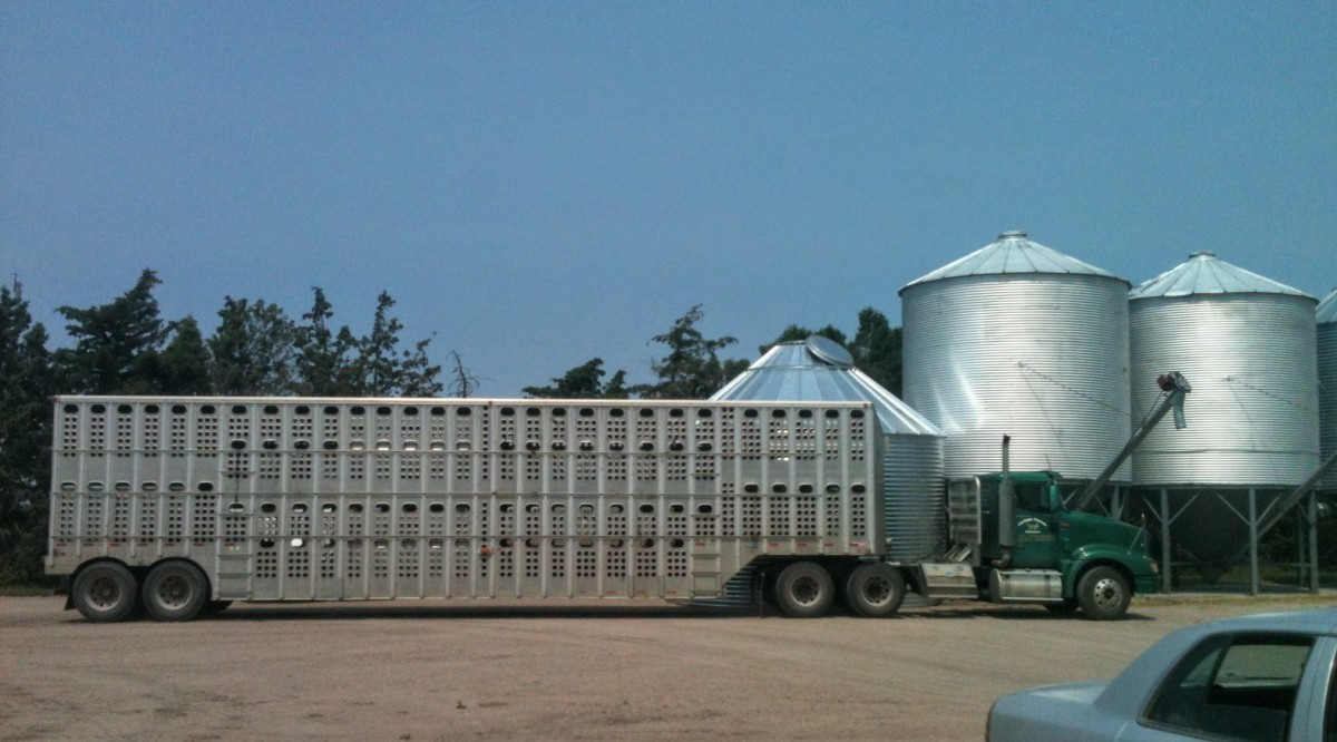 A truck with a livestock trailer made a handy wind block while this bin was under construction.