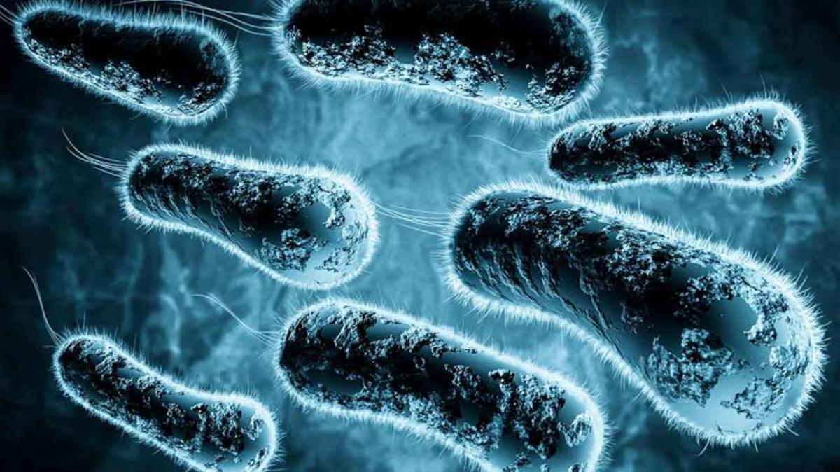 Apocalypse Of Antibiotics