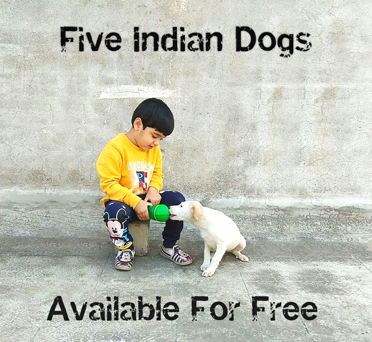 Five Indian Dogs Available For Free