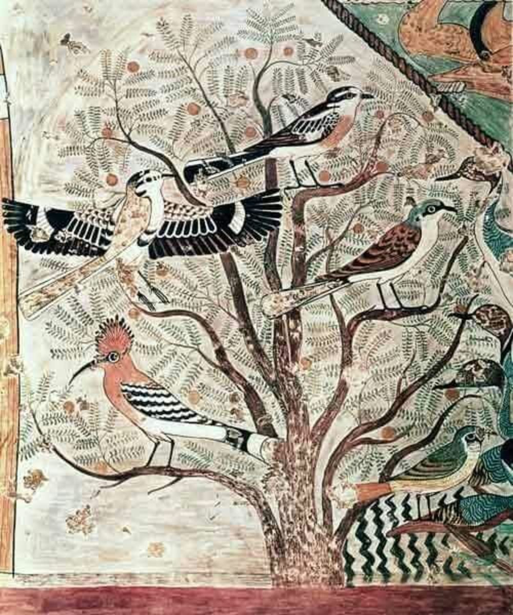 Birds on an acacia tree, wall painting from Tomb of Khnumhotep III. He was an Ancient Egyptian high steward and vizier of the 12th Dynasty.