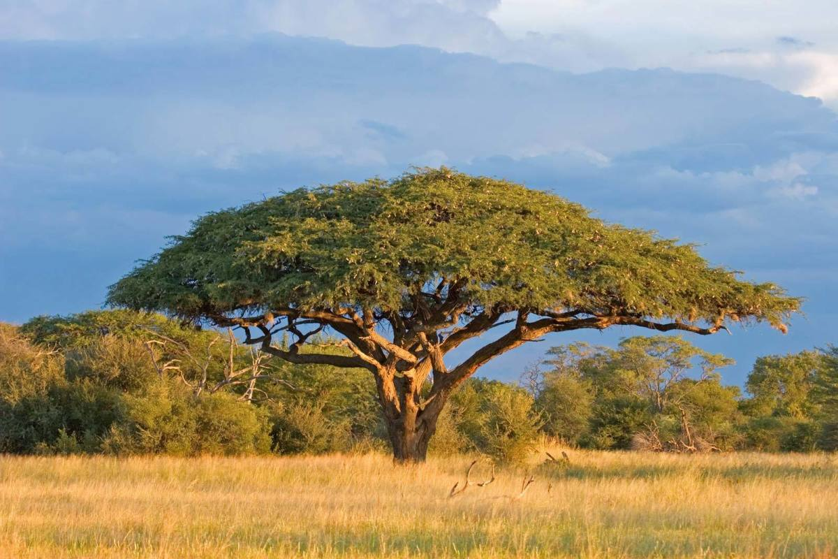 Gum Arabic: Facts, Properties, and Importance