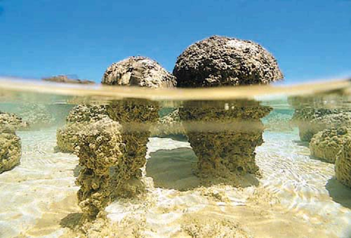 The stromatolites forming today in the shallow waters of Shark Bay, Australia are built by colonies of microbes. Credit: University of Wisconsin-Madison