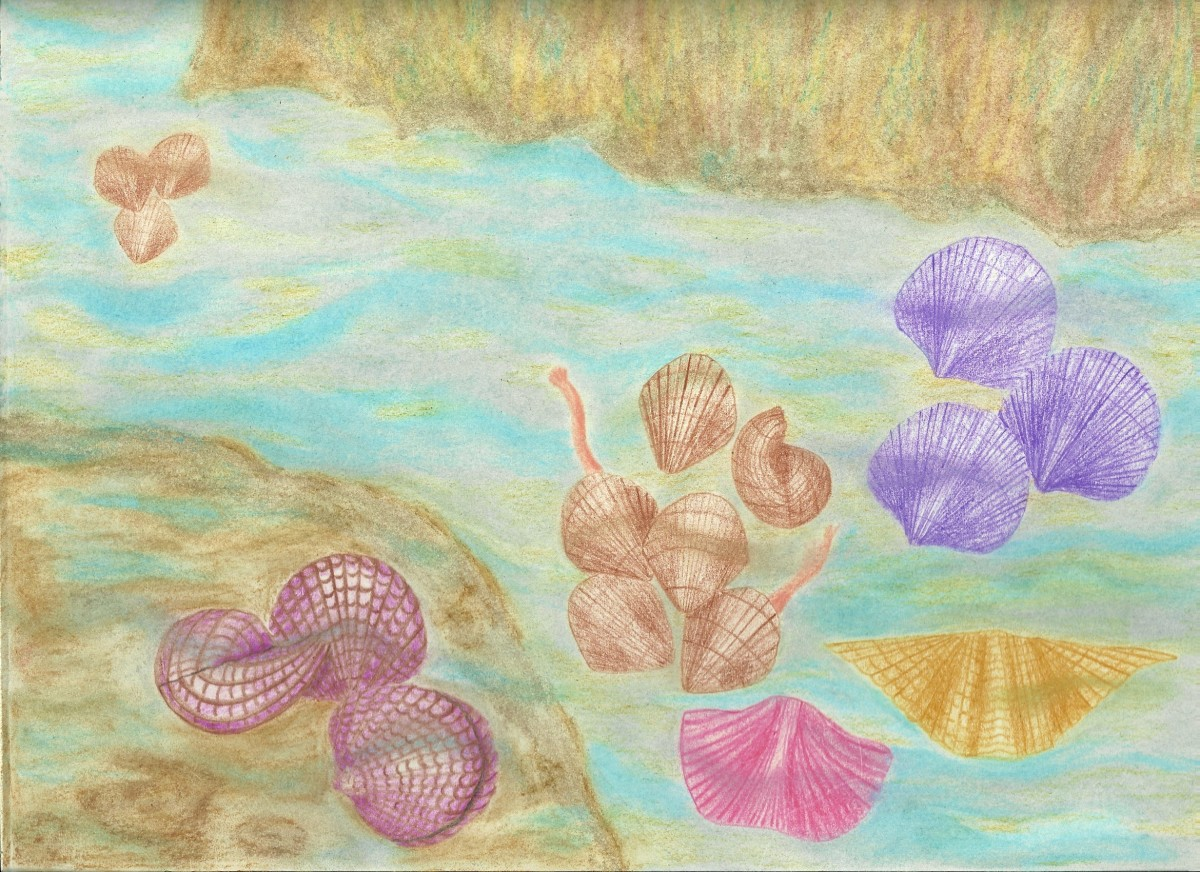 Brachiopods in the Ocean Mist Drawing
