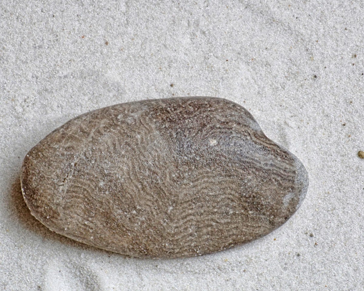 Lake Michigan Beach Stromatolite Fossil (Wet)