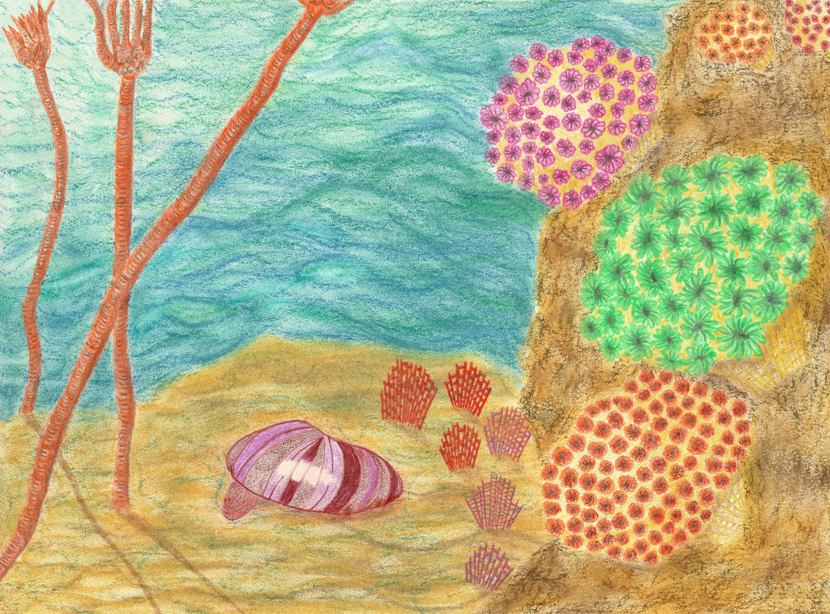 Ancient Seabed Drawing with Petoskey Stone Corals, Crinoids, Clams and Byozoans