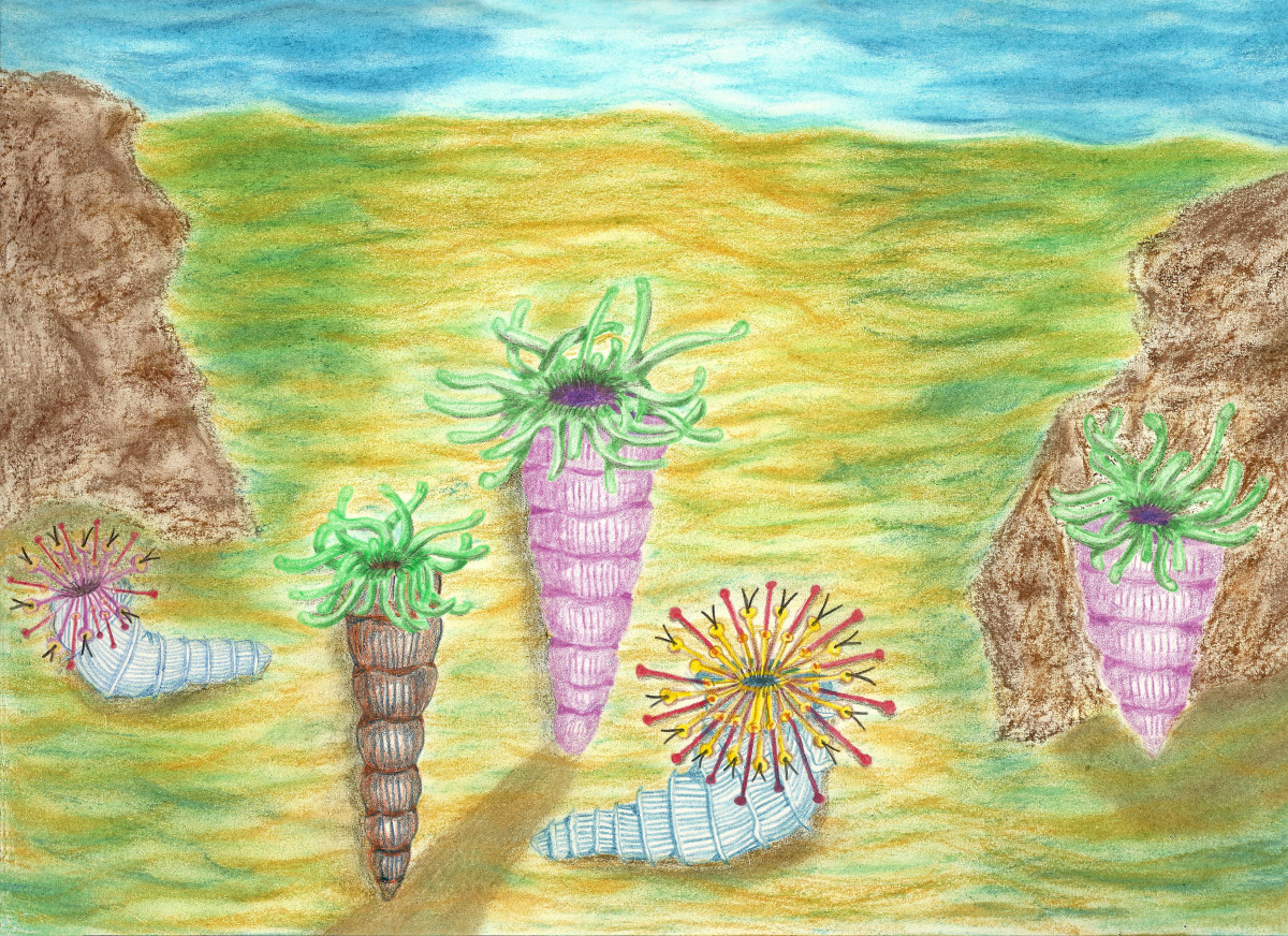 Drawing Rendition of Extinct Horn Corals